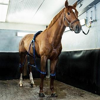 Gastblog Equine legcooler
