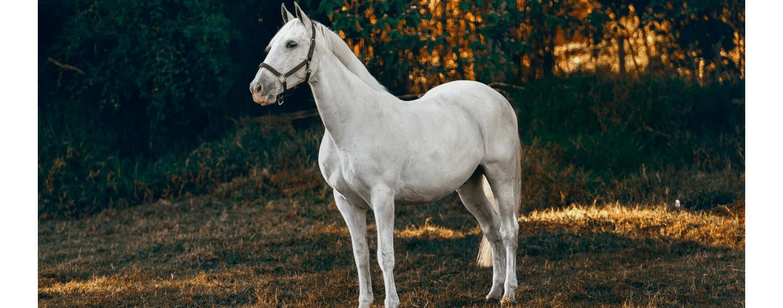 Onbalans in calciumwaardes bij mijn paard