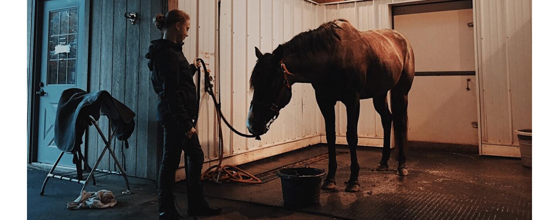 paard met maagproblemen