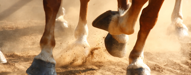 Brokkelhoeven bij paarden