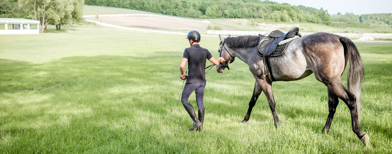 Verzorgen van je paard