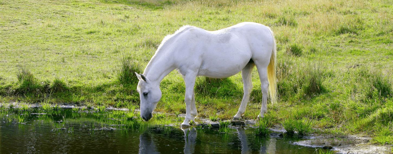 Elektrolyten voor paarden