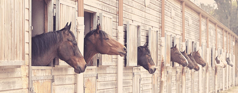 Voorkomen van stalondeugden bij paarden