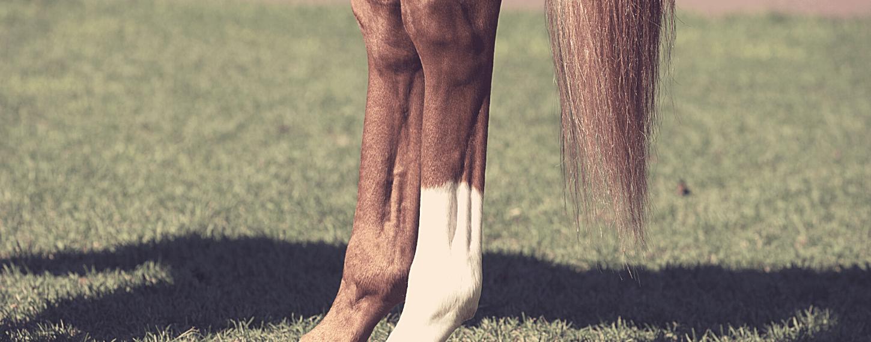 Peesblessures voorkomen bij paarden