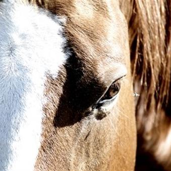 Eerste hulp bij je paard