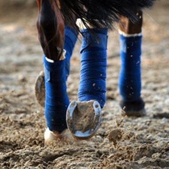 Feiten en Fabels over Glucosamine voor paarden