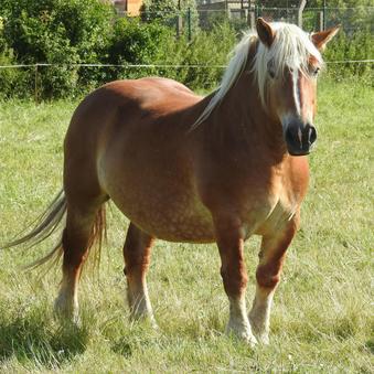 Gewichtsproblemen bij paarden