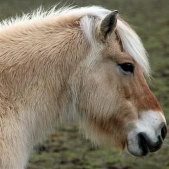 Help je paard door de wintervacht