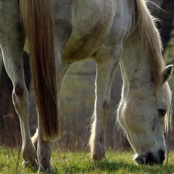 Minder soepele gewrichten bij paarden