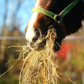 Nieuw ruwvoer voor je paard