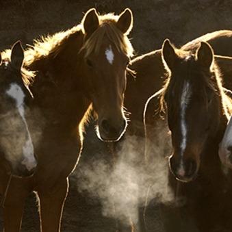 Gezonde luchtwegen bij paarden