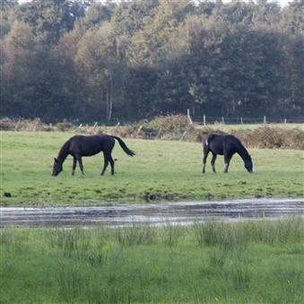 Leverbot bij paarden