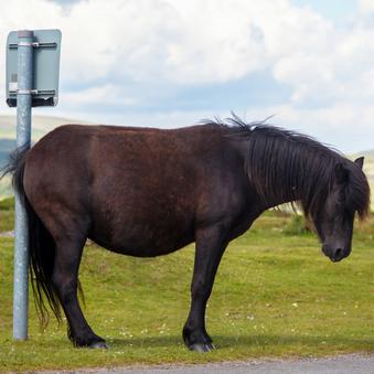 Luizen, teken en mijten bij paarden