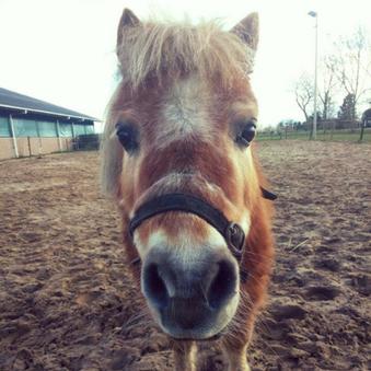 Ondersteunen van een senior paard