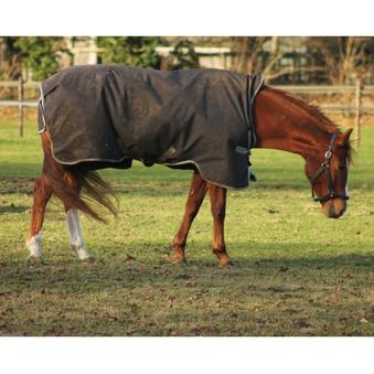 Spierbevangenheid bij paarden