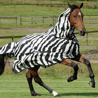 Zebra motief bij paardendekens