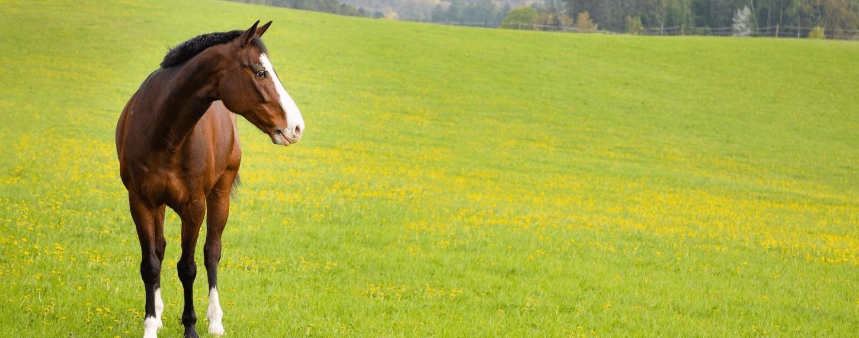 Voer voor je paard bij 24/7 buiten