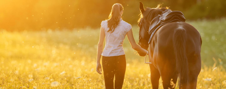 Drainagekuur voor een paard