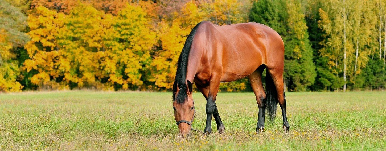 Detoxkuur voor een paard