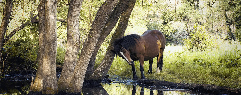 Schuren en jeuk aan staart en manen bij paarden