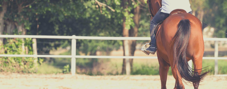 Trauma's en overbelasting bij paarden