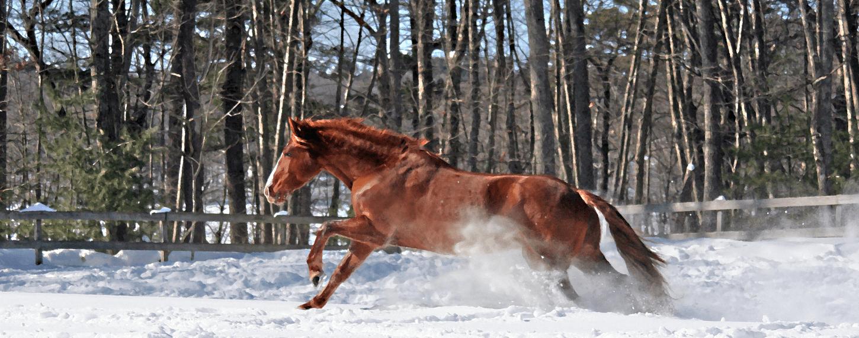 Winter tips voor mijn paard