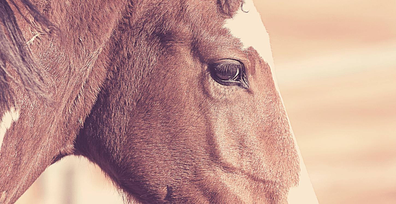 Verdikte speekselklieren bij paarden