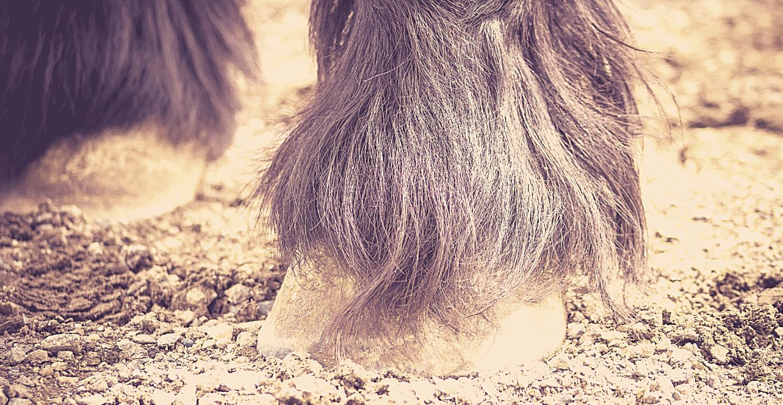 Schurft bij paarden
