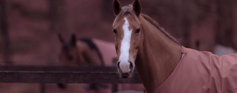 Welk paardendeken opdoen?