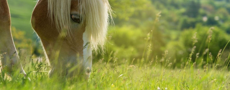 Voorjaarsgras paarden